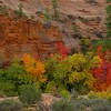 Zion, Bryce, De Chelly - Oct 2008 :